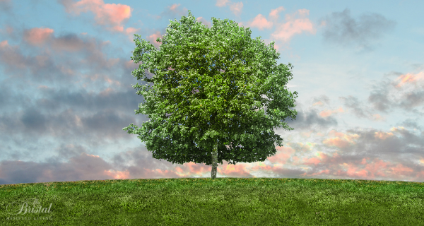 Simple tips to live greener