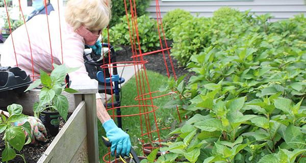 Resident planting in the community garden
