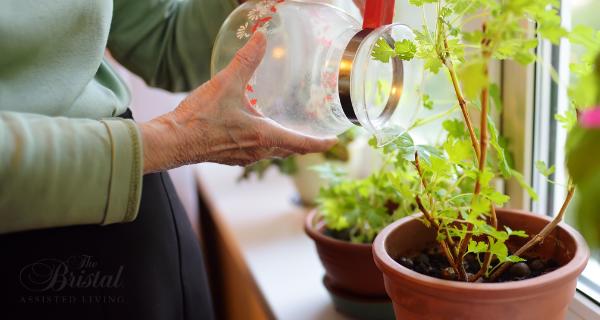 Older woman watering indoor garden